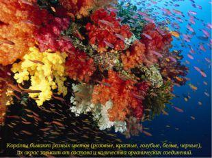 Кораллы бывают разных цветов (розовые, красные, голубые, белые, черные), их