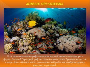 Просторы кораллового рифа стали домом для большого числа флоры и фауны. Больш