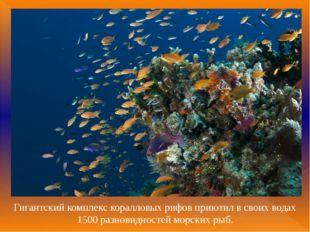 Гигантский комплекс коралловых рифов приютил в своих водах 1500 разновидносте