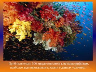 Приблизительно 500 видов относится к истинно рифовым, наиболее адаптированны