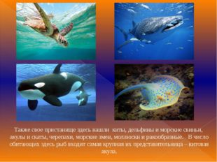 Также свое пристанище здесь нашли киты, дельфины и морские свиньи, акулы и с