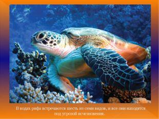 В водах рифа встречаются шесть из семи видов, и все они находятся под угрозо