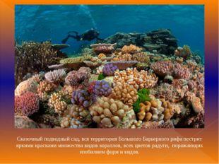Сказочный подводный сад, вся территория Большого Барьерного рифа пестрит ярки