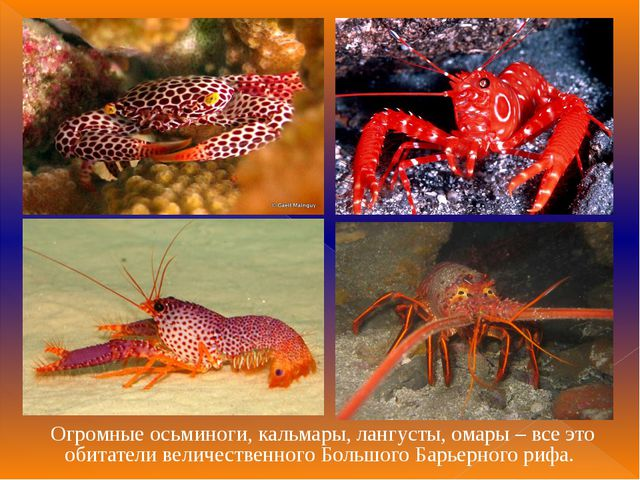 Огромные осьминоги, кальмары, лангусты, омары – все это обитатели величествен...