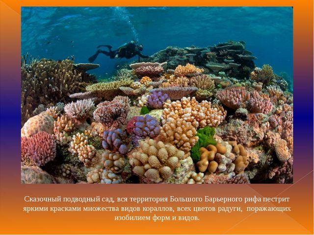 Сказочный подводный сад, вся территория Большого Барьерного рифа пестрит ярки...