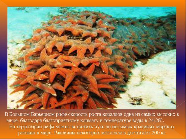 В Большом Барьерном рифе скорость роста кораллов одна из самых высоких в мире...