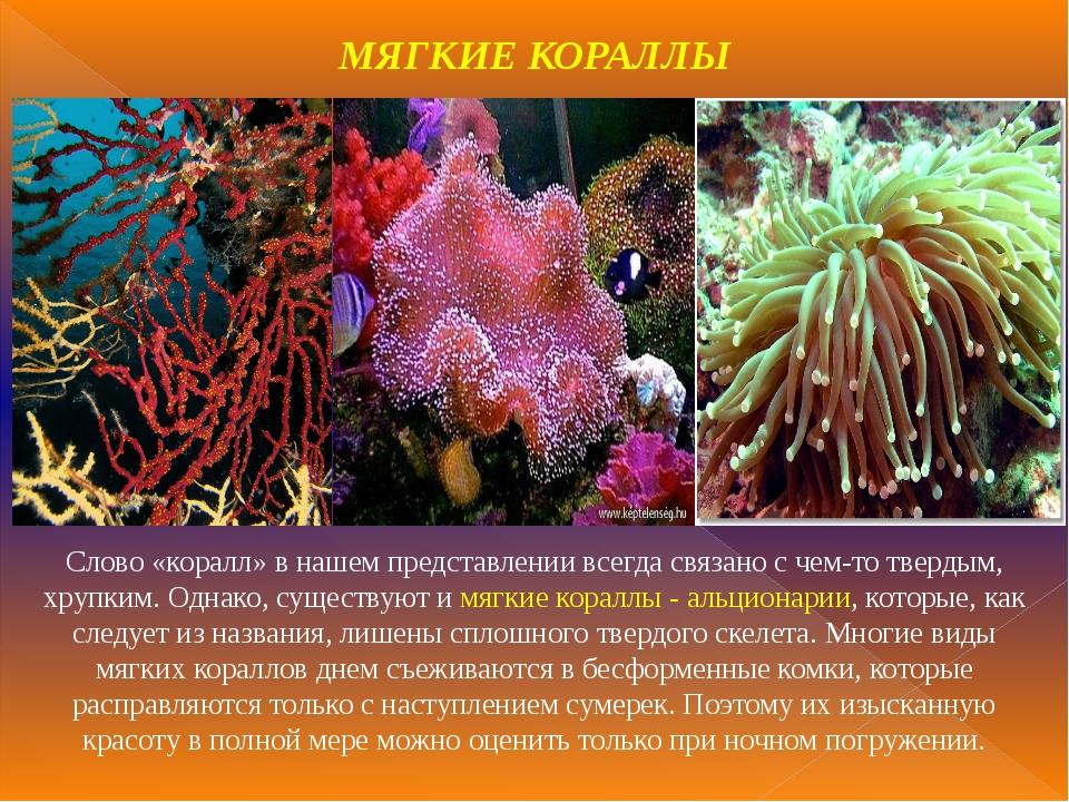 МЯГКИЕ КОРАЛЛЫ Слово «коралл» в нашем представлении всегда связано с чем-то т...