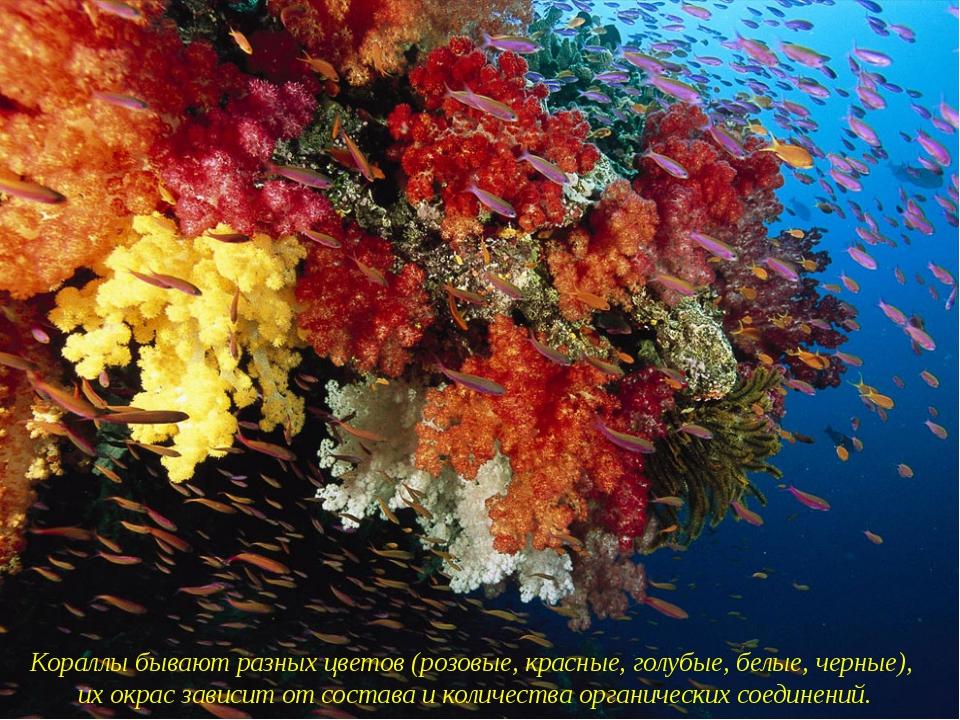 Кораллы бывают разных цветов (розовые, красные, голубые, белые, черные), их...