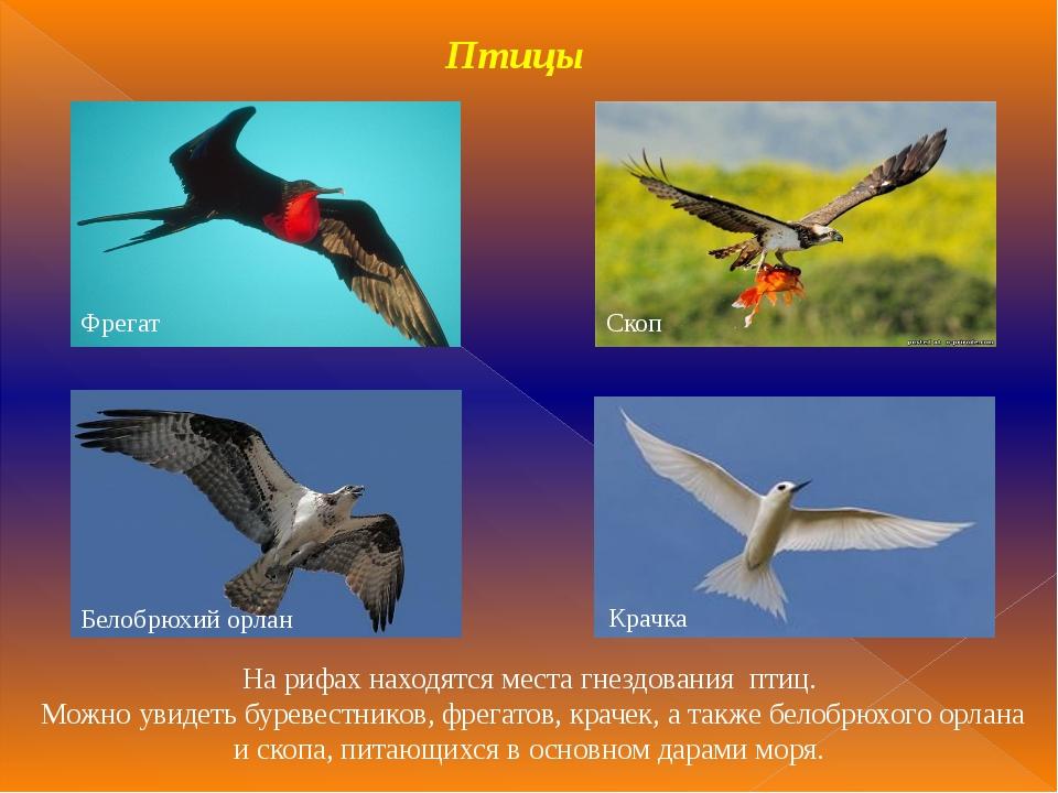 Птицы На рифах находятся места гнездования птиц. Можно увидеть буревестников,...