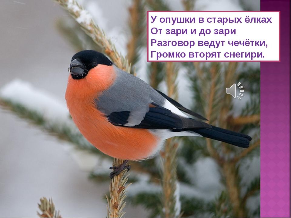 У опушки в старых ёлках От зари и до зари Разговор ведут чечётки, Громко втор...