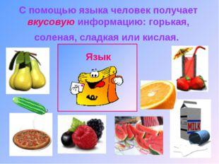 С помощью языка человек получает вкусовую информацию: горькая, соленая, сладк