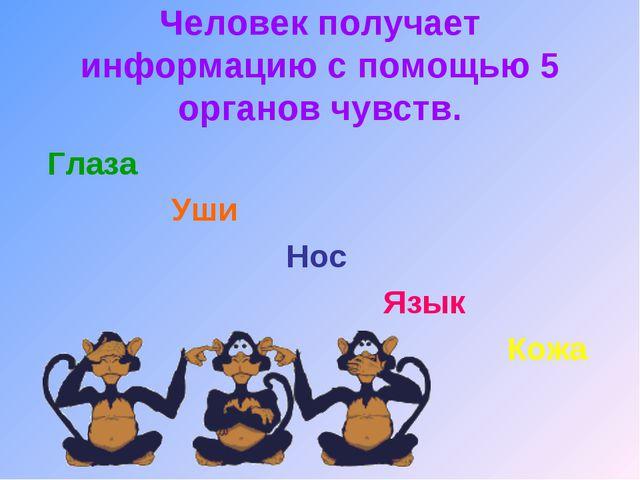 Человек получает информацию с помощью 5 органов чувств. Глаза Уши Нос Язык Кожа