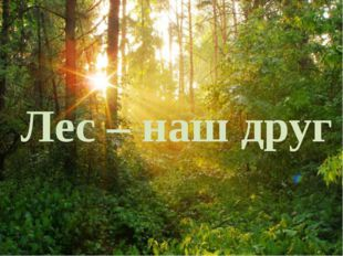 Лес-наш друг Лес – наш друг