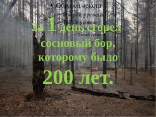 За 1 день сгорел сосновый бор, которому было 200 лет.