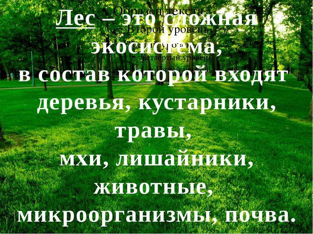 Лес – это сложная экосистема, в состав которой входят деревья, кустарники, т...