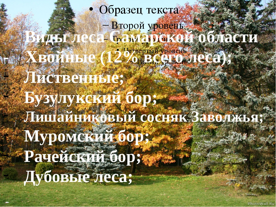 Виды леса Самарской области - Хвойные (12% всего леса); Лиственные; Бузулукс...