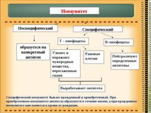 Иммунитет Неспецифический Специфический образуется на конкретный антиген В-ли