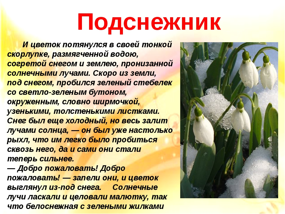 И цветок потянулся в своей тонкой скорлупке, размягченной водою, согретой сн...