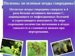 Полезны ли зеленые ягоды смородины? Неспелые ягоды смородины содержат в 4 раз