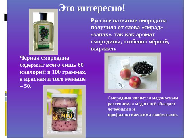 Это интересно! Смородина является медоносным растением, а мёд из неё обладает...
