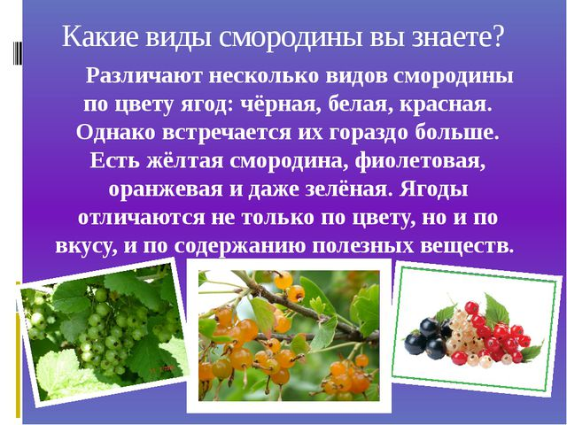 Какие виды смородины вы знаете? Различают несколько видов смородины по цвету...