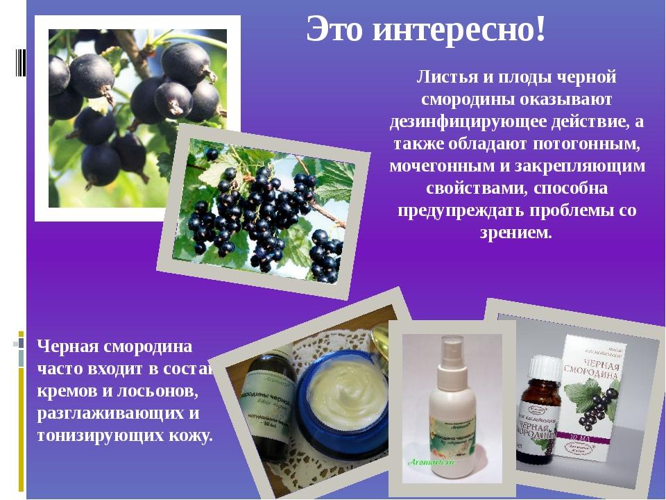 Это интересно! Черная смородина часто входит в состав кремов и лосьонов, разг...