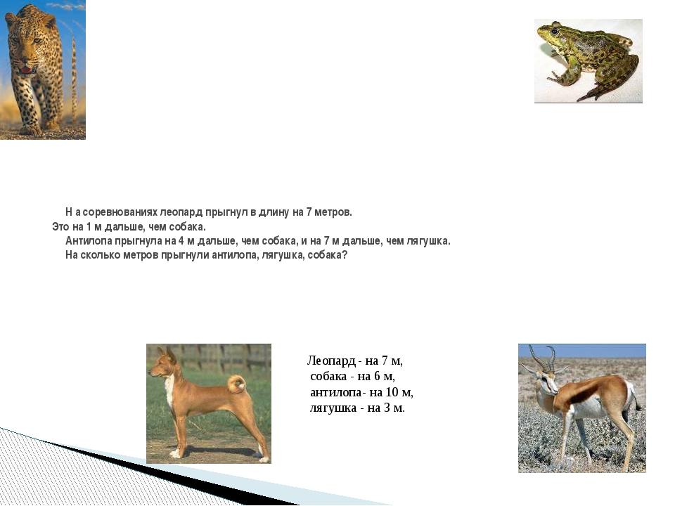 Н а соревнованиях леопард прыгнул в длину на 7 метров. Это на 1 м дальше, че...