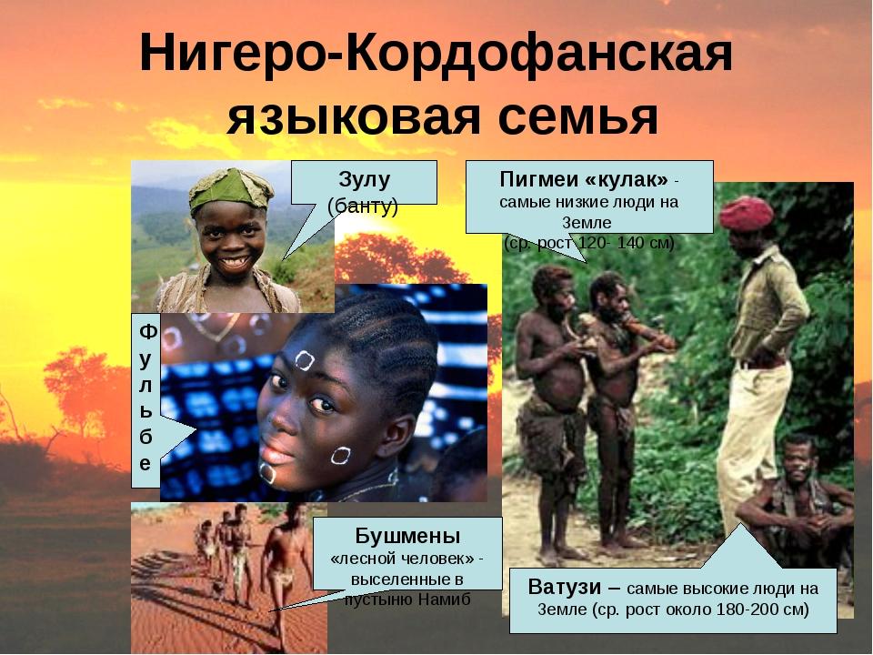 Нигеро-Кордофанская языковая семья Зулу (банту) Пигмеи «кулак» - самые низкие...
