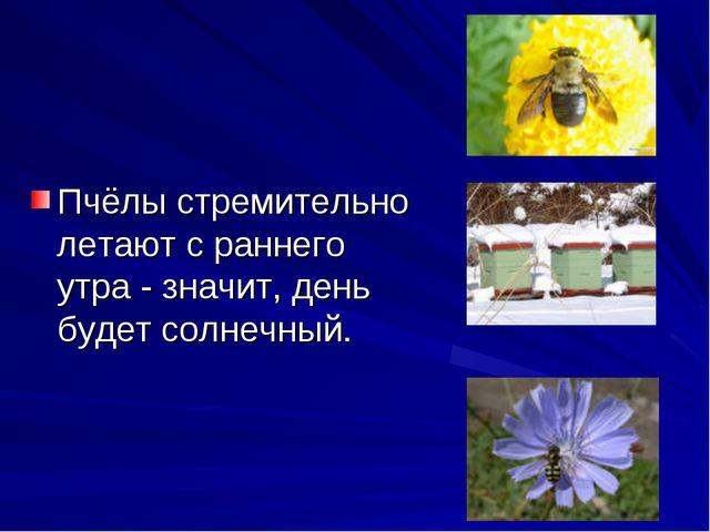 Пчёлы стремительно летают с раннего утра - значит, день будет солнечный.