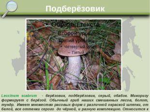 Подберёзовик Leccinum scabrum - берёзовик, подберёзовик, серый, обабок. Микор