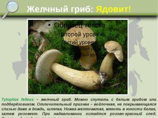 Желчный гриб: Ядовит! Tylopilus felleus – желчный гриб. Можно спутать с белым