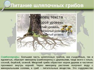 Питание шляпочных грибов Симбиотрофы. Большая часть шляпочных грибов, как съе