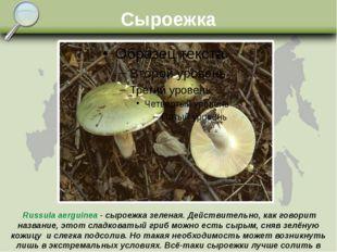 Сыроежка Russula aerguinea - сыроежка зеленая. Действительно, как говорит наз