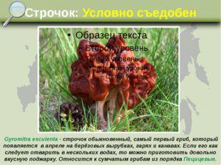 Строчок: Условно съедобен Gyromitra esculenta - строчок обыкновенный, самый п
