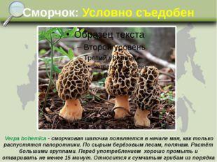 Сморчок: Условно съедобен Verpa bohemica - сморчковая шапочка появляется в на