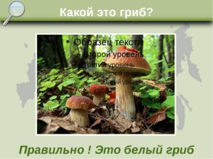 Какой это гриб? Правильно ! Это белый гриб