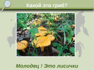 Какой это гриб? Молодец ! Это лисички
