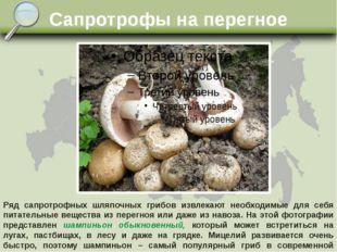 Сапротрофы на перегное Ряд сапротрофных шляпочных грибов извлекают необходимы