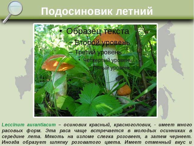Подосиновик летний Leccinum aurantiacum – осиновик красный, красноголовик, -...