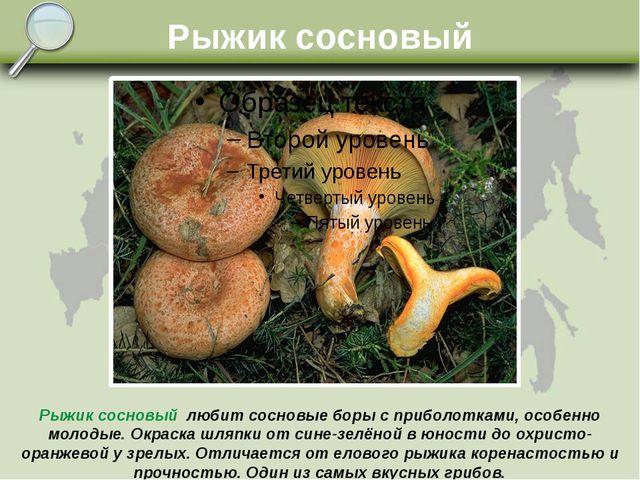 Рыжик сосновый Рыжик сосновый любит сосновые боры с приболотками, особенно мо...