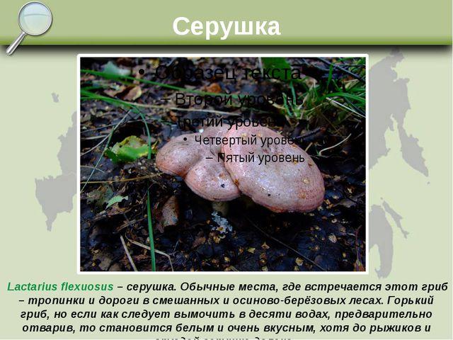 Серушка Lactarius flexuosus – серушка. Обычные места, где встречается этот гр...