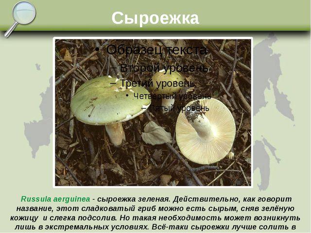Сыроежка Russula aerguinea - сыроежка зеленая. Действительно, как говорит наз...