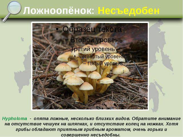 Ложноопёнок: Несъедобен Hypholoma - опята ложные, несколько близких видов. Об...