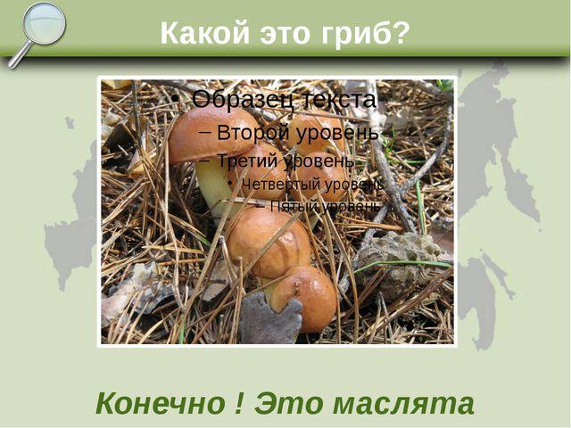Какой это гриб? Конечно ! Это маслята
