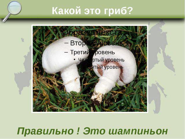 Какой это гриб? Правильно ! Это шампиньон
