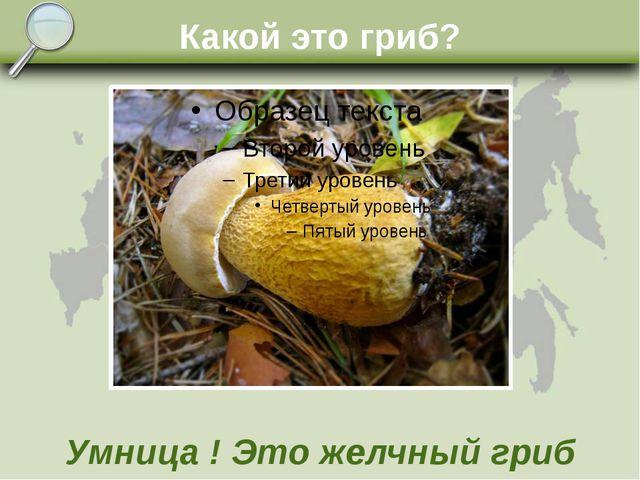Какой это гриб? Умница ! Это желчный гриб
