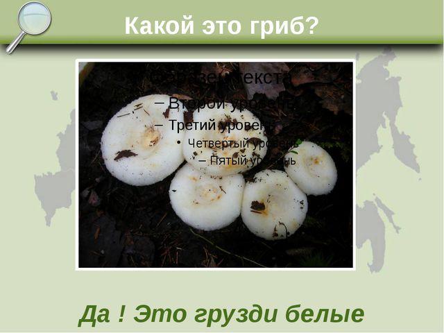 Какой это гриб? Да ! Это грузди белые