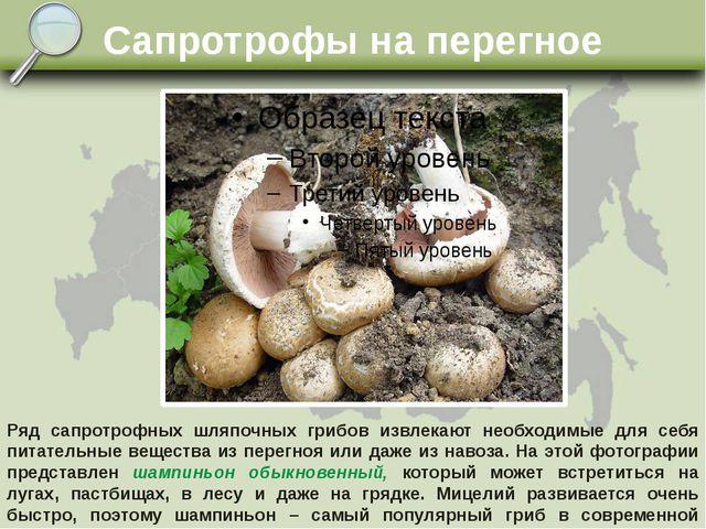 Сапротрофы на перегное Ряд сапротрофных шляпочных грибов извлекают необходимы...
