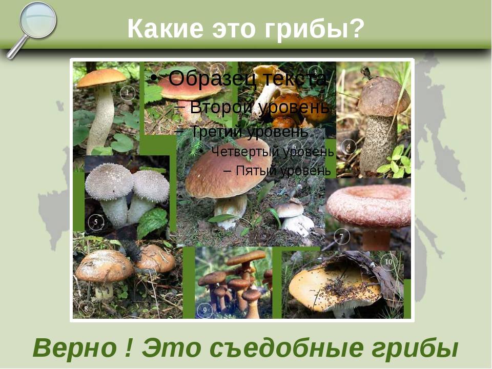 Какие это грибы? Верно ! Это съедобные грибы