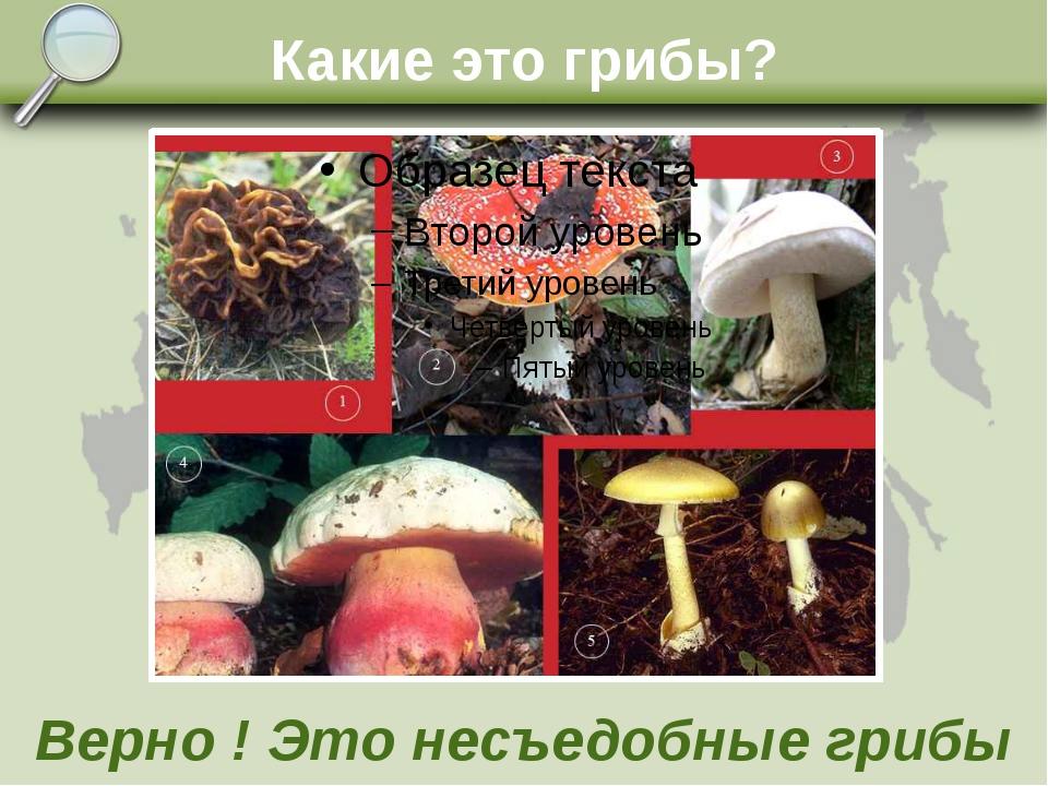 Какие это грибы? Верно ! Это несъедобные грибы